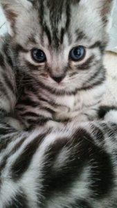 IMG-20160824-Yoyeoh-kitten