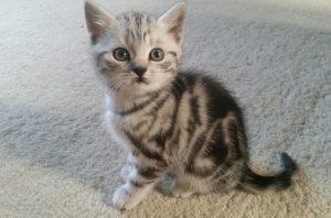 Harli kitten1