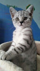Indigo kitten1