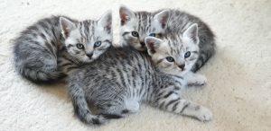 Whisper kittens